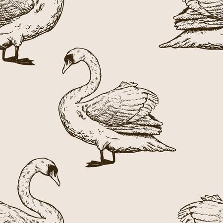 Swan vogel gravure vectorillustratie