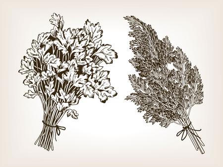 Kruidenpeterselie en dille die vectorillustratie graveren. Kruiden. Bruine verouderde achtergrond. Imitatie van een krasbordstijl. Hand getekende afbeelding. Stock Illustratie