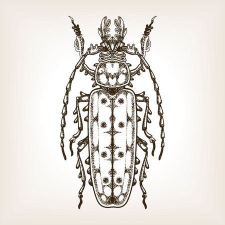 Bug engraving vector illustration