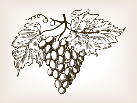 Bunch of grapes with leaves engraving vector illustration. Brown aged backgroung. Scratch board style imitation. Hand drawn image. Çizim