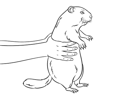 Groundhog animal in hands coloring vector illustration. Medical procedure. Isolated image on white background. Comic book style imitation.