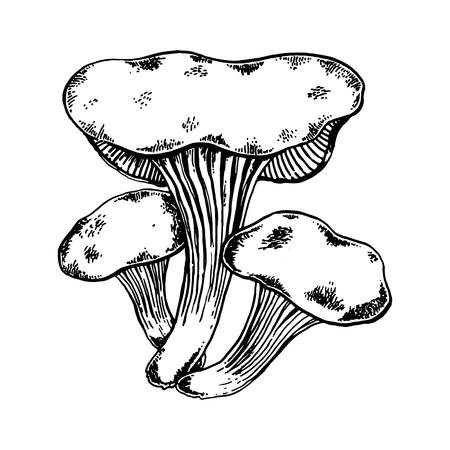 Oyster tree mushroom engraving vector