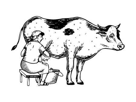 Woman milk cow engraving vector illustration. Çizim