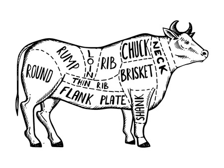 Meat diagram cow engraving vector illustration.