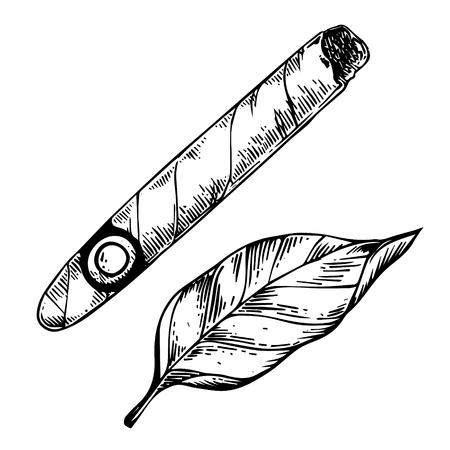 Cigar and tobacco leaf engraving vector Standard-Bild