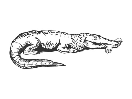 Alligator with human hand in mouth engraving vector illustration. Scratch board style imitation. Black and white hand drawn image.
