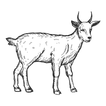 Goat farm animal engraving vector illustration Иллюстрация