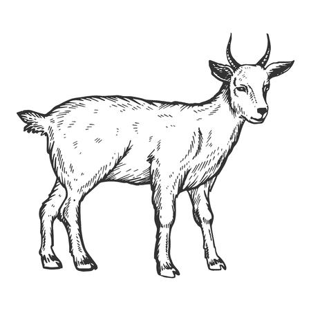 Illustration vectorielle de chèvre ferme animal gravure Vecteurs