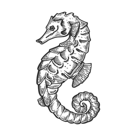 Sea horse animal engraving vector illustration. Scratch board style imitation. Black and white hand drawn image. Ilustração