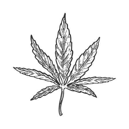 Narcotic cannabis leaf engraving vector illustration. Scratch board style imitation. Black and white hand drawn image. Illustration