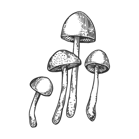 Narcotic psychodelic mushroom psilocybin engraving vector illustration. Scratch board style imitation. Black and white hand drawn image.