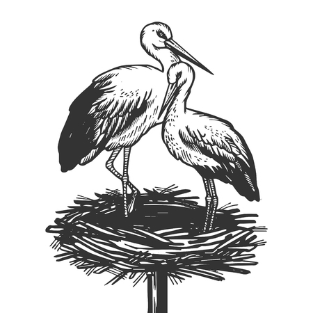 Stork in nest animal engraving vector illustration