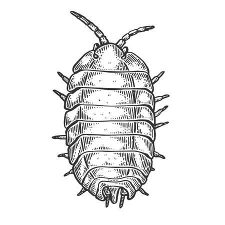 Wood louse insect engraving vector illustration. Scratch board style imitation. Black and white hand drawn image.