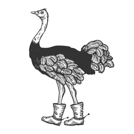 Ostrich in boots with spur animal engraving vector