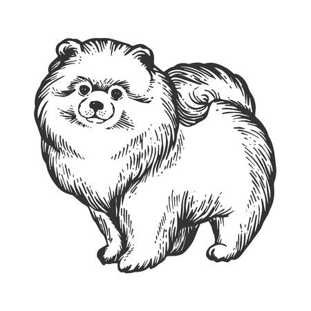 Ilustración de vector de grabado animal perro Spitz