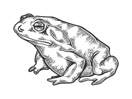 Hallucinogenic toad engraving vector illustration