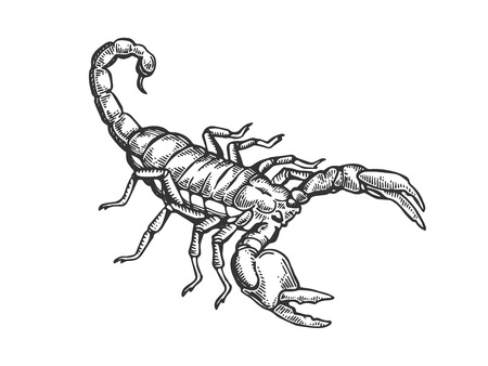 Scorpio engraving vector illustration