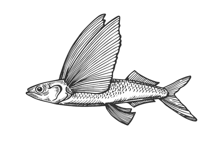 Flying fish engraving vector illustration
