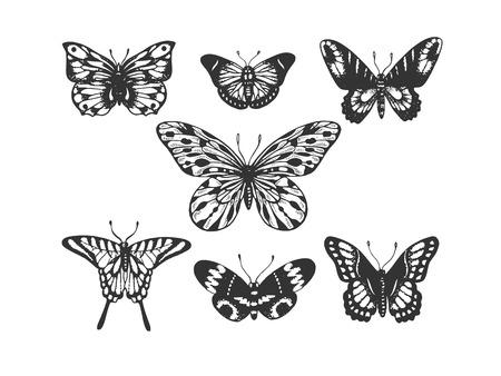 Butterfly insect animal engraving vector illustration. Scratch board style imitation. Black and white hand drawn image.