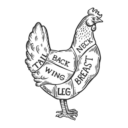 Meat diagram chicken engraving vector illustration. Scratch board style imitation. Black and white hand drawn image.