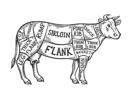 Meat diagram cow engraving vector illustration. Scratch board style imitation. Black and white hand drawn image.