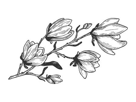 Illustrazione di vettore di incisione del ramo di magnolia. Imitazione in stile gratta e vinci. Immagine disegnata a mano. Vettoriali