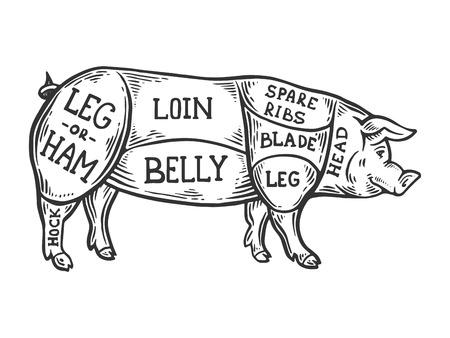 Fleischdiagramm Schwein Gravur Vektor-Illustration. Nachahmung im Scratchboard-Stil. Handgezeichnetes Schwarz-Weiß-Bild.