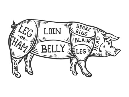 Meat diagram pig engraving vector illustration. Scratch board style imitation. Black and white hand drawn image.