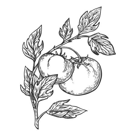 Tomatenplant tak gravure vectorillustratie. Imitatie in de stijl van een krasbord. Hand getekende afbeelding. Vector Illustratie