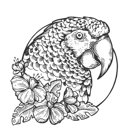 Ilustración de vector de grabado de animales de cabeza de pájaro loro. Imitación de tablero de rascar. Imagen dibujada a mano en blanco y negro.