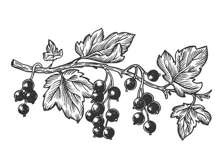 Johannisbeerpflanzenzweig Gravurvektorillustration. Nachahmung im Scratch Board-Stil. Hand gezeichnetes Bild.