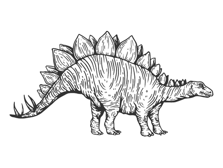 Stegosaurus dinosaur prehistoric extinct animal engraving vector illustration. Scratch board style imitation. Black and white hand drawn image.