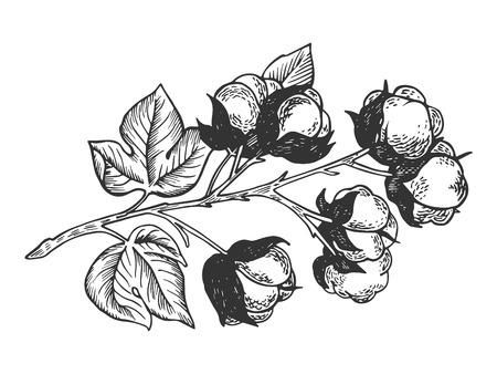 Ilustración de vector de grabado de rama de algodón. Imitación de tablero de rascar. Imagen dibujada a mano.