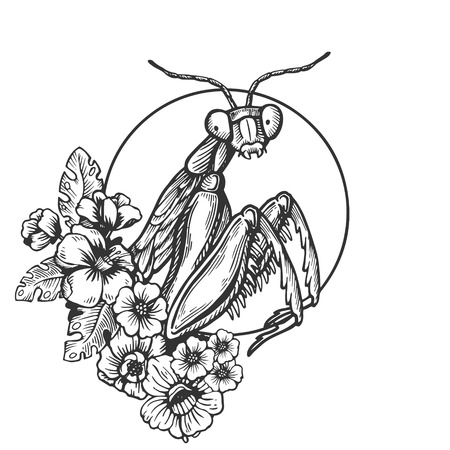 Mantis insect engraving vector illustration. Scratch board style imitation. Black and white hand drawn image. Illustration