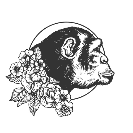 Monkey ape head animal engraving vector illustration. Scratch board style imitation. Black and white hand drawn image.