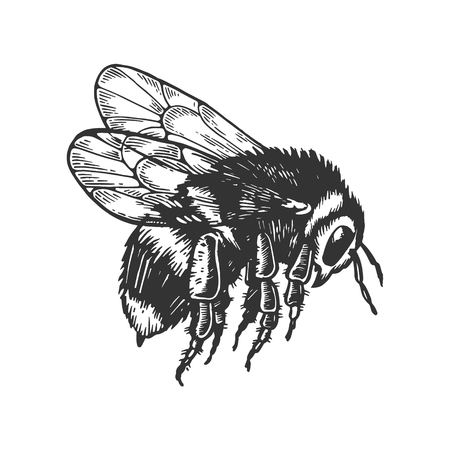 bumblebee insect animal engraving vector Illustration