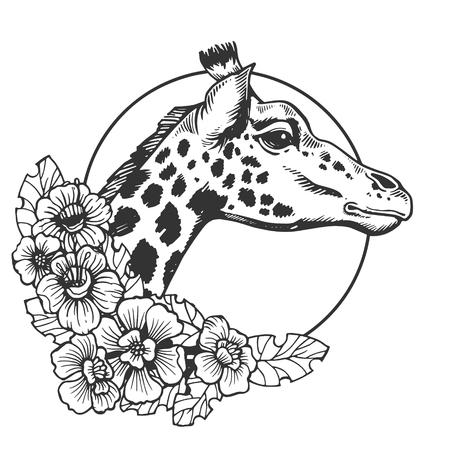Giraffe head animal engraving vector illustration. Scratch board style imitation. Black and white hand drawn image. Stock Photo