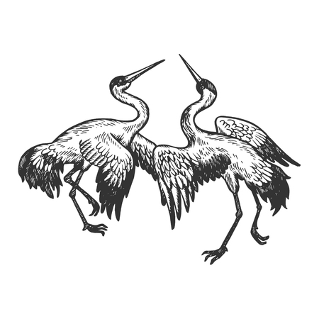 Dancing storks birds animal engraving vector illustration. Scratch board style imitation. Black and white hand drawn image.
