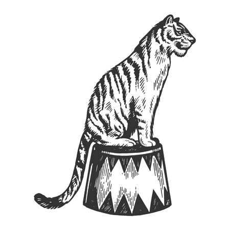 Circus tiger animal engraving vector illustration. Scratch board style imitation. Black and white hand drawn image.