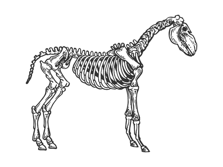 Horse animal skeleton engraving vector illustration. Scratch board style imitation. Black and white hand drawn image.