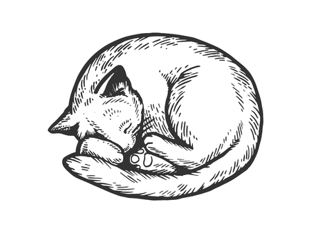 Sleeping cat engraving vector illustration. Scratch board style imitation. Black and white hand drawn image.