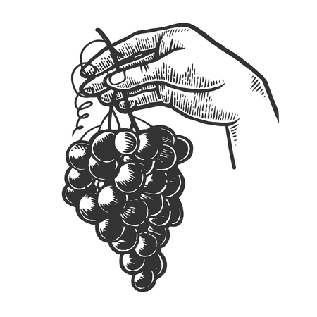 Bunch of grapes in woman hand engraving vector illustration. Scratch board style imitation. Black and white hand drawn image.