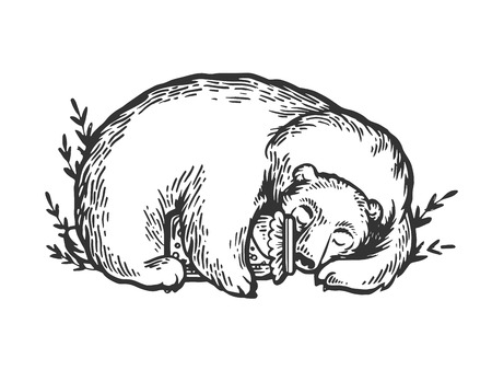 Sleeping bear hugging jar of honey engraving vector illustration. Scratch board style imitation. Black and white hand drawn image.