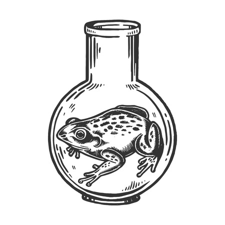 Frog animal in laboratory glass flask engraving vector illustration. Scratch board style imitation. Black and white hand drawn image.