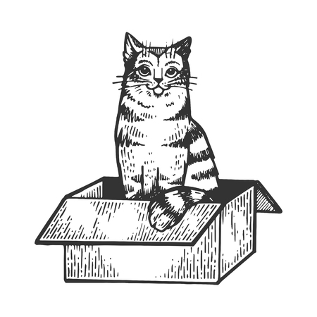Cat sitting in box engraving vector illustration. Scratch board style imitation. Black and white hand drawn image. Illustration
