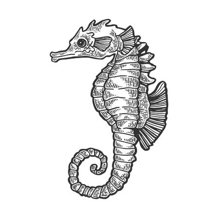 Sea horse animal engraving vector illustration. Scratch board style imitation. Black and white hand drawn image. Vektoros illusztráció