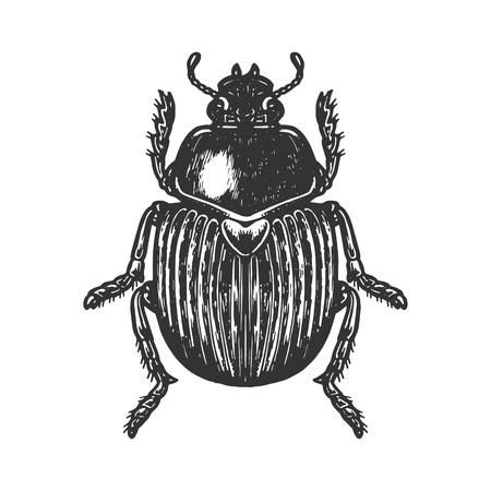 Scarab beetle engraving vector illustration. Scratch board style imitation. Black and white hand drawn image.