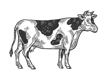 Ilustración de vector de grabado de animales de granja rural de vaca. Imitación de tablero de rascar. Imagen dibujada a mano en blanco y negro.
