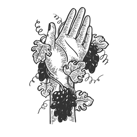 Hand braided with grape vine plant engraving vector illustration. Scratch board style imitation. Black and white hand drawn image. Illusztráció