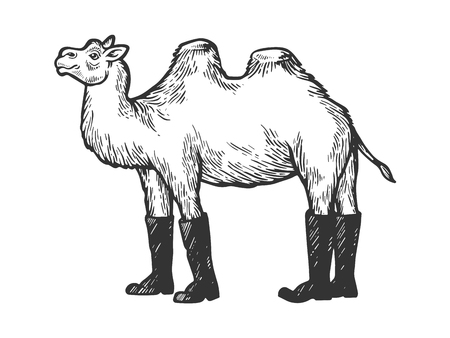 Camel animal in high boots engraving vector illustration. Scratch board style imitation. Black and white hand drawn image. Archivio Fotografico - 124033366